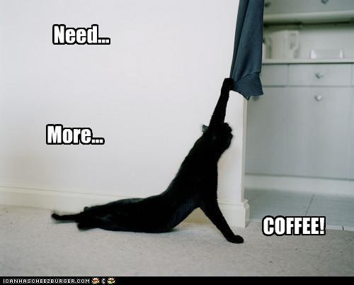 before coffee lol cat